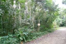 Terreno à venda  em Ilhabela-SP - Praia da Vila REF:TE-411